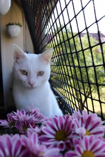 Katzenschutznetz nach Maß - Extra stark | Schutznetze24