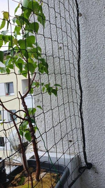 Sicherheitsnetz per m² (nach Maß) 1,0/50 mm | Schutznetze24