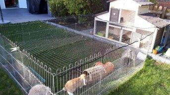 Geflügelnetz für Gehege per m² (nach Maß) | Schutznetze24