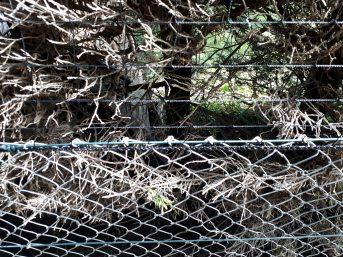 Netz per Quadratmeter (nach Maß) 1,5/60 mm | Schutznetze24